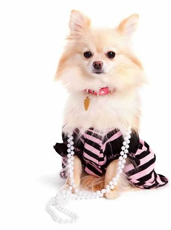 24-fashion%20plate%20dog